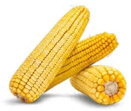 Гібрид кукурудзи Моніка 350 МВ купити в Україні