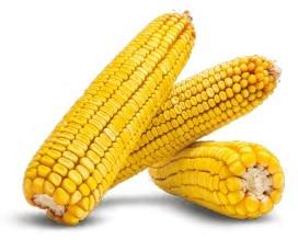 Гибрид кукурузы Новый купить в Украине