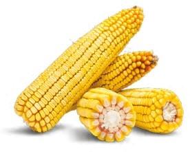 Гибрид кукурузы Платинум купить в Украине
