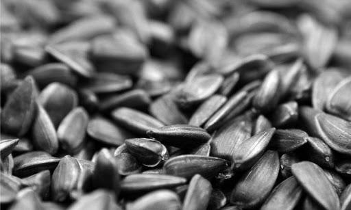 Подсолнечник сорт Щелкунчик купить семена
