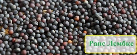 Семена рапса Лембке в Украине